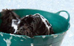 Best Dog Shampoo For Odor And Shedding