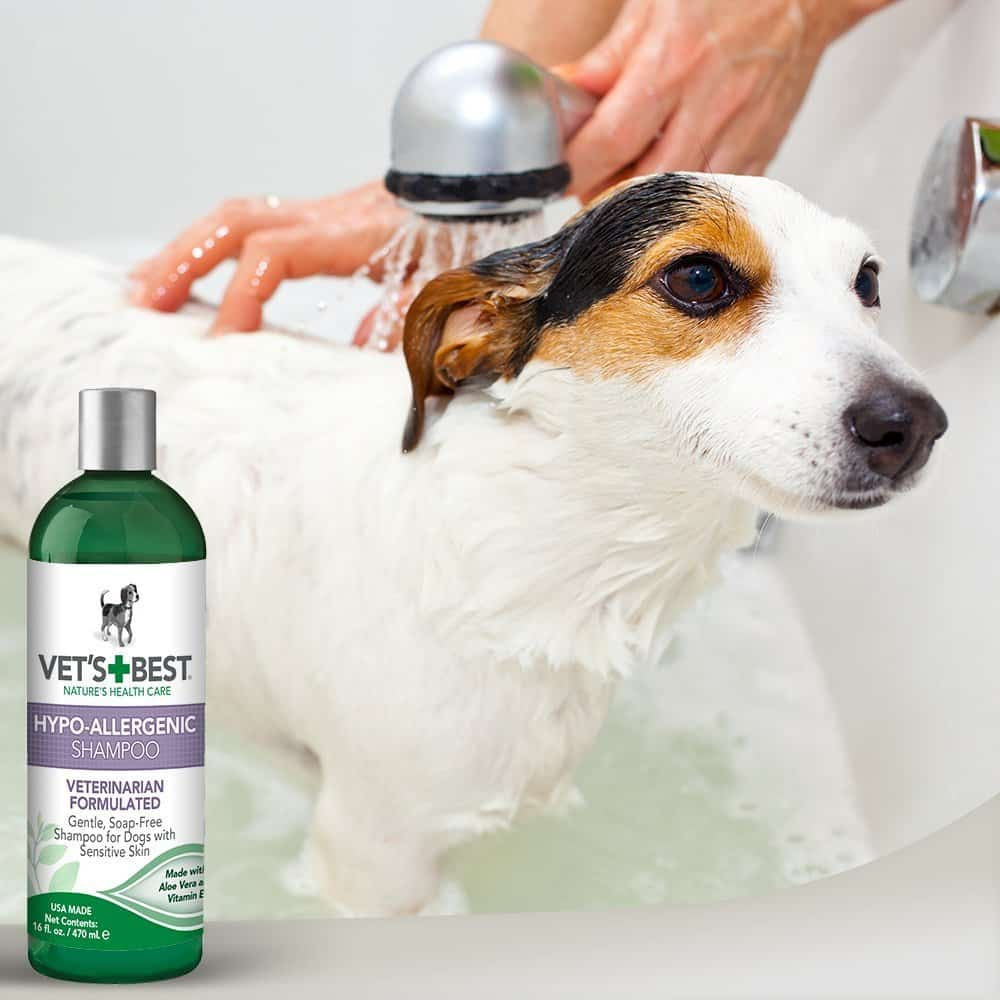 Best Dog Shampoo For Allergy Sufferers