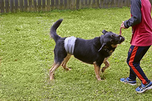Belly Band for Dogs
