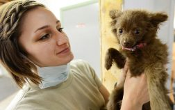 Dog Conjunctivitis Treatment Over The Counter