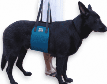 Dog Slings For Handicapped you should know about