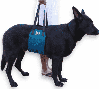 Dog Slings For Handicapped