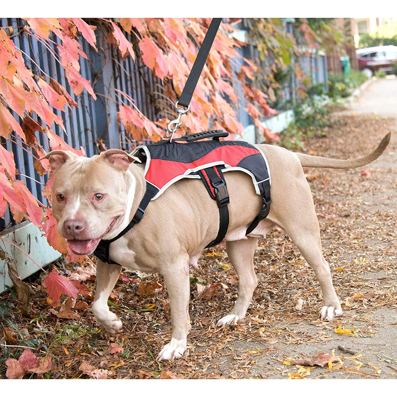 Peak Pooch Dog Support Harness
