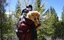 Is it possible to find dog carrier backpack 60 lbs or 70 lbs
