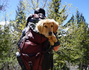 Is it possible to find dog carrier backpack 60 lbs or 70 lbs?