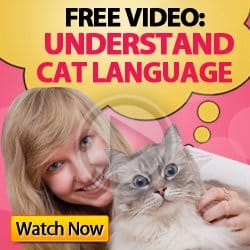understand cat language