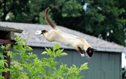 How High Can A Cat Jump