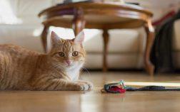 How To Sedate A Cat