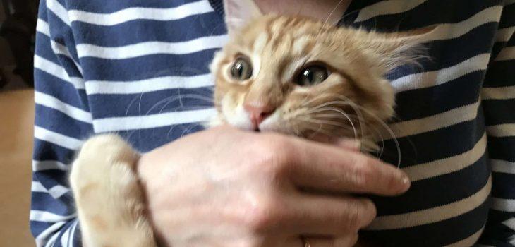 How To Discipline A Cat – 7 Best Methods
