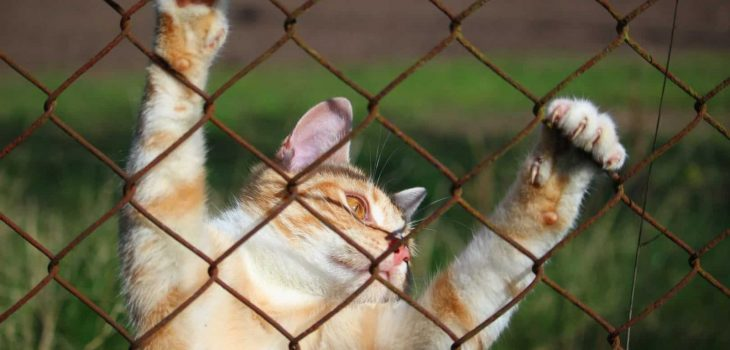 how to keep cat from jumping fence