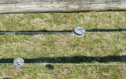 Can Electric Fence Hurt a Dog and What Are The Side Effects?