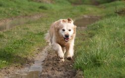 How Fast Can a Dog Run? Facts About Canines