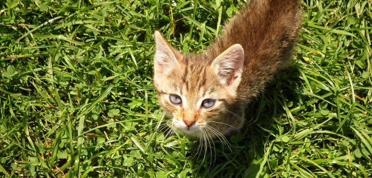 How To Calm A Kitten: 10 Effective Tricks