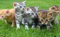 How To Raise a Kitten To Be Cuddly and Affectionate