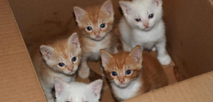 When is Kitten Season and What You Need to Know About it