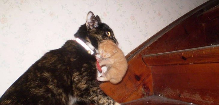 Why Does Mother Cat Move Only One Kitten