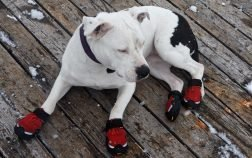 How To Make Dog Booties (DIY Guide)