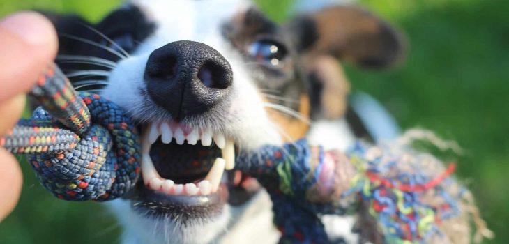How To Make Dog Toothpaste (DIY Recipes)