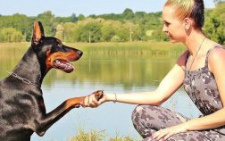 How To Teach A Dog To Shake Paws