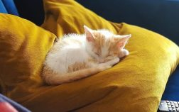 how to get a kitten to sleep