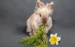 Can Rabbits Eat Italian Parsley