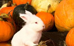 Can Rabbits Eat Pumpkin