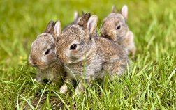 Can rabbit eat mushrooms