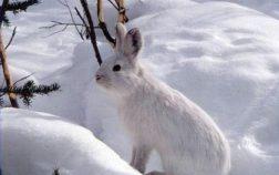 Can Rabbits Eat Cherries