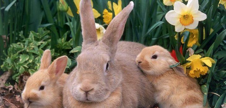 Can Rabbits Eat Raisins