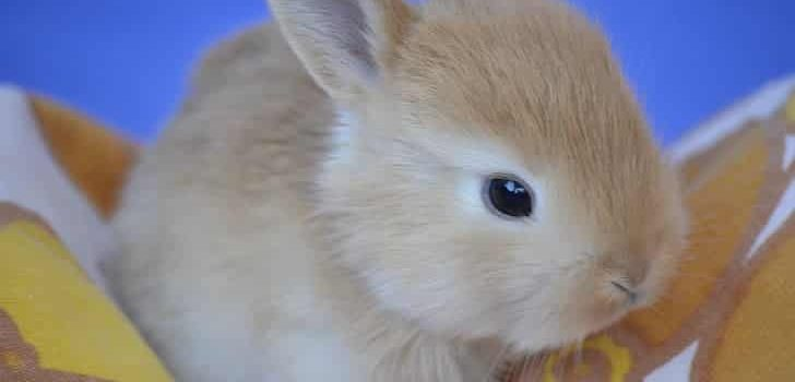 Can Rabbits Eat Bread
