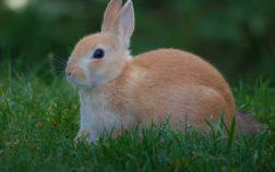 Can Rabbits Eat Sweet Potatoes