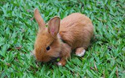 Can rabbits eat lemons