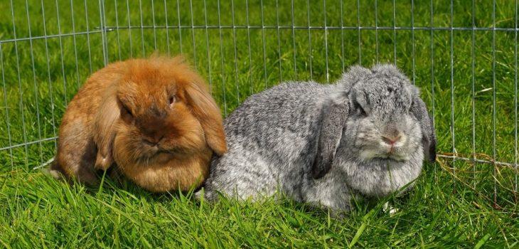 Do Rabbits Eat Mice