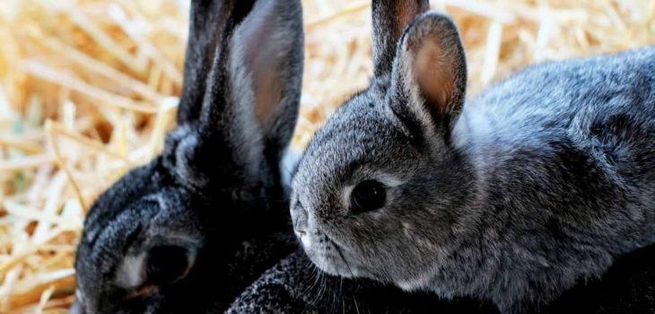 Can Rabbits Eat Cardboard