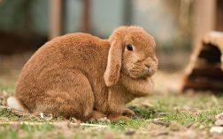 Can Rabbits Eat Oats