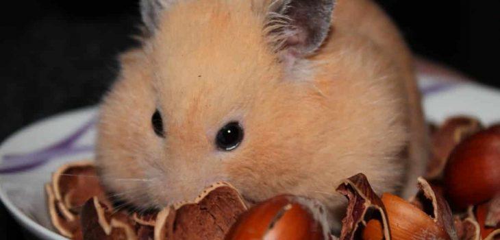 Do Guinea Pigs Eat Pistachio Nuts