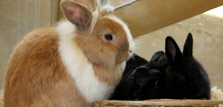 Can rabbits eat cheerios
