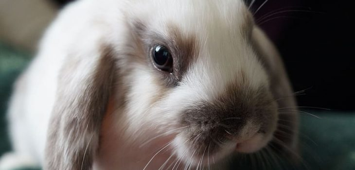 can rabbits have radishes