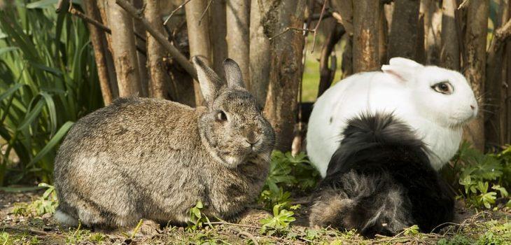 Can rabbits climb
