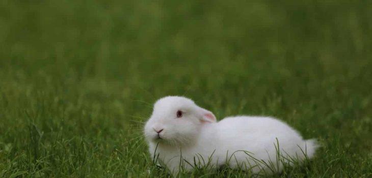 Can Rabbits Eat Garlic