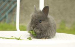 Can Rabbits Eat Leeks