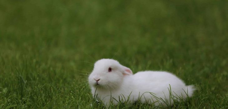 can rabbits eat fennel
