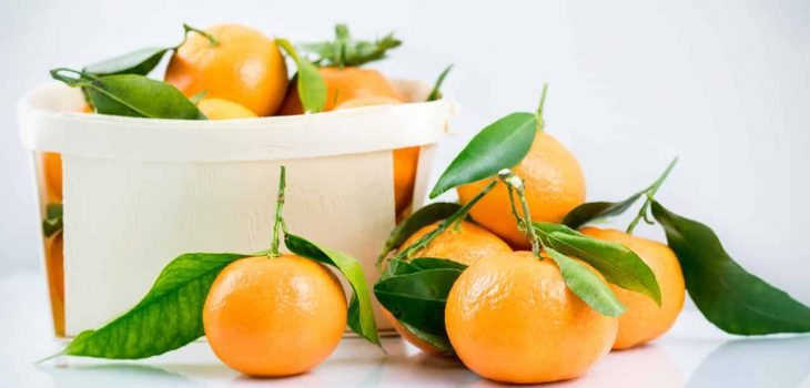 Can Rabbits Have Clementines