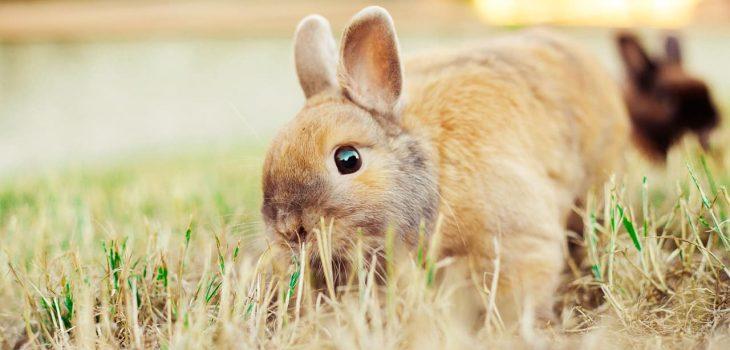 Can rabbits eat butternut squash