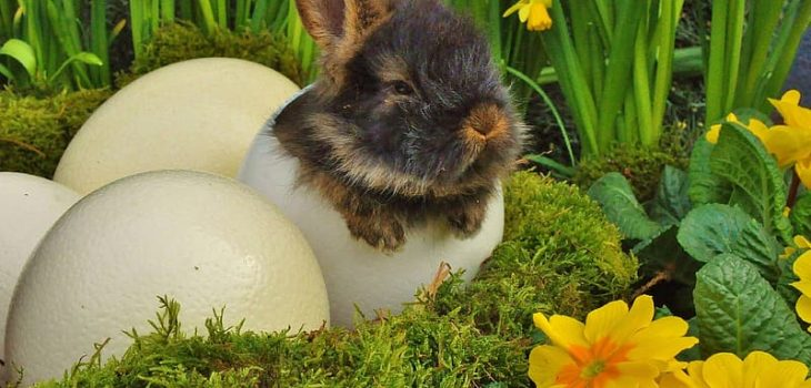 Can Rabbits Eat Eggs