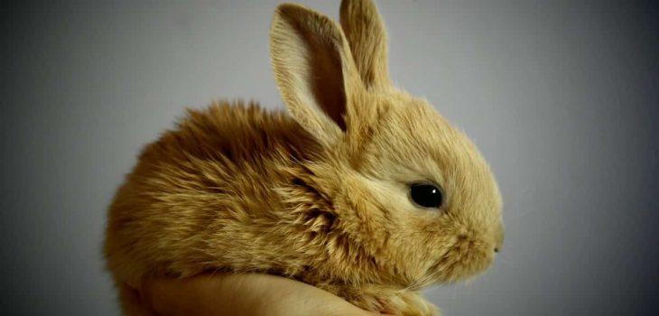 rabbits eating raspberries
