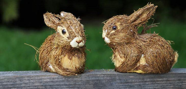 Can rabbits eat grapefruits