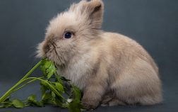 Can Rabbits Eat Bean Sprouts