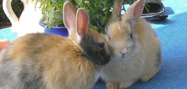 Can Rabbits Eat Cashews