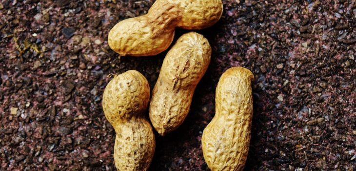 Can Rabbits Eat Peanut Shells